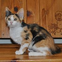 Adopt A Pet :: Darci - Parsons, KS