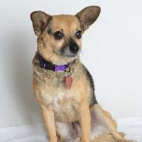 Mixed Breed (Small) Mix Dog for adoption in Medford, Oregon - Skittles