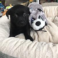Adopt A Pet :: Ned - Monticello, GA