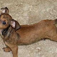 Adopt A Pet :: Mason - Clear Lake, IA