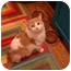 Photo 2 - Domestic Shorthair Cat for adoption in Muncie, Indiana - Chumley--PETSMART
