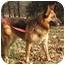 Photo 3 - German Shepherd Dog Dog for adoption in Nesbit, Mississippi - Sheena