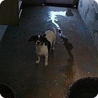 Adopt A Pet :: Sissy - Fort Scott, KS