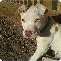 Adopt A Pet :: Bullet - Alliance, NE