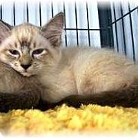 Adopt A Pet :: Ling - Shelton, WA