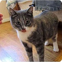 Adopt A Pet :: Khloe - Colmar, PA
