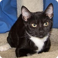 Adopt A Pet :: K-Kenna3-Kaleb - Colorado Springs, CO
