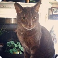 Adopt A Pet :: Jessica - Raleigh, NC