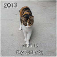 Adopt A Pet :: Callie - Smithtown, NY
