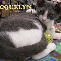 Adopt A Pet :: Jacquelyn - Rosemead, CA