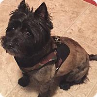 Adopt A Pet :: McDuff - Bend, OR