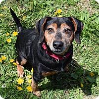 Adopt A Pet :: Diesel - Lisbon, OH