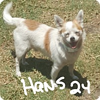 Adopt A Pet :: Hans - Palm Bay, FL