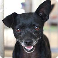 Adopt A Pet :: BEETLE - Kyle, TX