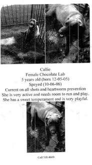Labrador Retriever Dog for adoption in Haughton, Louisiana - Callie