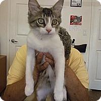 Adopt A Pet :: Buster - Bunnell, FL