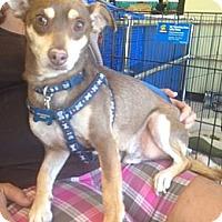 Adopt A Pet :: Jake Jake - Oceanside, CA