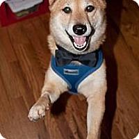 Adopt A Pet :: Hansamu - Centennial, CO