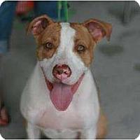 Adopt A Pet :: Niko - Rochester, NY