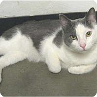 Adopt A Pet :: Trace - Mesa, AZ