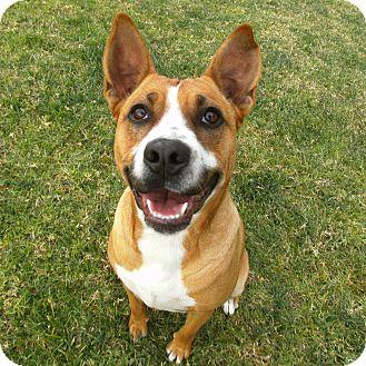 Cattle Dog Mix Dog for adoption in El Cajon, California - Frannie