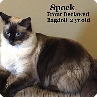Adopt A Pet :: Spock - Bentonville, AR