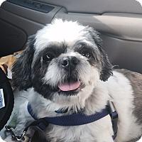 Adopt A Pet :: Guy - Marietta, GA