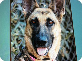 German Shepherd Dog Dog for adoption in Los Angeles, California - LARA VON LANGENAU