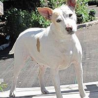 Adopt A Pet :: Peggy Sue - Conroe, TX