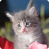 Adopt A Pet :: Carina - Rosamond, CA