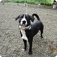 Adopt A Pet :: Crocket - Tillamook, OR