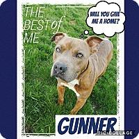 Adopt A Pet :: Gunner - Unionville, VA