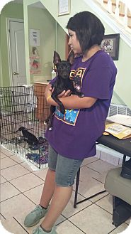 Chihuahua/Dachshund Mix Puppy for adoption in San Antonio, Texas - Tala