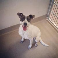 Adopt A Pet :: Jenna - Tiger, GA