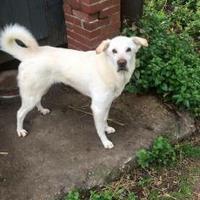 Adopt A Pet :: Gracie - Florence, AL