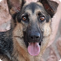 Adopt A Pet :: Bruce von Bertkow - Los Angeles, CA