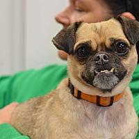 Adopt A Pet :: Quasimodo - Indianapolis, IN