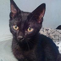 Adopt A Pet :: Drops - Morganton, NC
