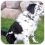 Photo 4 - Australian Shepherd/Border Collie Mix Dog for adoption in Provo, Utah - Keiko