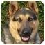 Photo 1 - German Shepherd Dog/Husky Mix Dog for adoption in Los Angeles, California - Lucky von Lagerhof