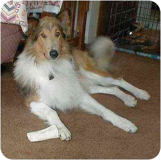 Collie Mix Dog for adoption in Owatonna, Minnesota - Chelsea