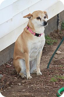 Chihuahua Mix Dog for adoption in Russellville, Kentucky - Millie