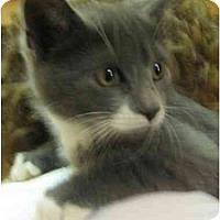 Adopt A Pet :: Jesse - Jenkintown, PA