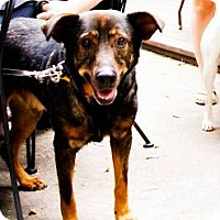 Adopt A Pet :: Dublin - Chicago, IL