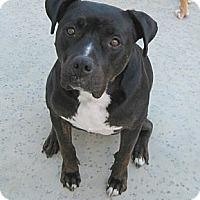 Adopt A Pet :: Kona - Ojai, CA
