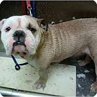 Adopt A Pet :: Cadillac - Winder, GA