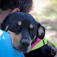 Adopt A Pet :: Baby - Plano, TX