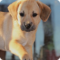 Adopt A Pet :: *Duncan - PENDING - Westport, CT