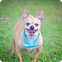 Adopt A Pet :: Thunder - Fort Valley, GA