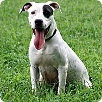 Adopt A Pet :: Domino - Lufkin, TX